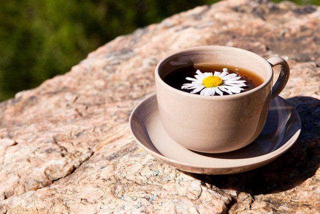 Papatya çayı zayıflatır mı? Papatya çayının sağlık faydaları